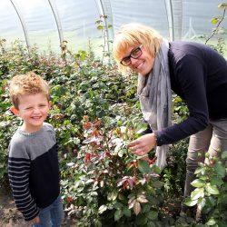 Familien Audick beim Rosenschneiden